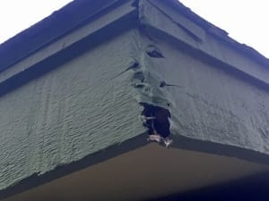 Rotten wood repair- fascia