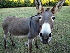 Donkey wall art